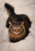 Image of beautiful cat — Stock Photo
