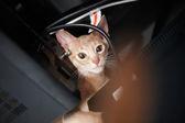 ładny czerwony kot — Zdjęcie stockowe