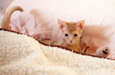 Cute small red cat — Stock Photo