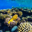 Red sea underwater coral reef — Stock Photo #69099589