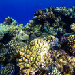 Red sea underwater coral reef — Stock Photo #69099595