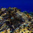 Red sea underwater coral reef — Stock Photo #69099621