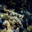 Red sea underwater coral reef — Stock Photo #69099633