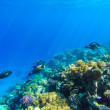 Red sea underwater coral reef — Stock Photo #70239857
