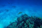 Red Sea sualtı mercan — Stok fotoğraf