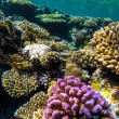 Red sea underwater coral reef — Stock Photo #72554607
