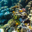Red sea underwater coral reef — Stock Photo #72554627