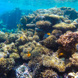 Red sea underwater coral reef — Stock Photo #72554705
