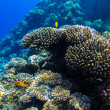 Red sea underwater coral reef — Stock Photo #72554731