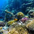 Red sea underwater coral reef — Stock Photo #72554841