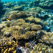 Red sea underwater coral reef — Stock Photo #72554867