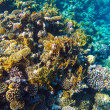 Red sea underwater coral reef — Stock Photo #72554891