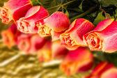 Beautiful wild-growing scarlet roses — Stock Photo
