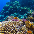 Red sea underwater coral reef — Stock Photo #81000092