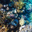 Red sea underwater coral reef — Stock Photo #81000102