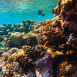 Red sea underwater coral reef — Stock Photo #81000714
