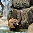 African elephant in natural environment standing under the water — Stock Photo #60984083