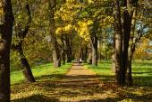 Autumn sunny landscape with   in Pushkin garden. — Stockfoto