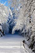 Into the Snow — Stock Photo