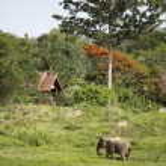 Elephant under huge orange and green trees — Stock Photo #76229393