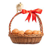 Chickens with basket — Stock Photo
