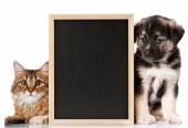 Pets with blackboard — Stock Photo