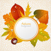 Vector round autumn leaves banner 1 — Stock Vector