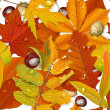 Seamless pattern from autumn leaves on the white background — Cтоковый вектор