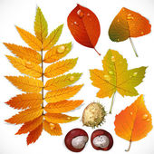 Yellow and red autumn leaves and chestnut — Stock Vector
