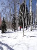 Downhill woman  skier — Stok fotoğraf