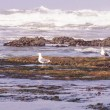 Seagulls  on  beach — Stock Photo #58118849