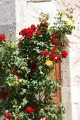Roses growing against the stone outer walls — Stock Photo