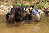 Tourist helps wash an elephant — Stock Photo