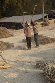 Making bamboo paper — Stock Photo