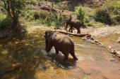 Mahout brings his elephant to the river — Stock Photo