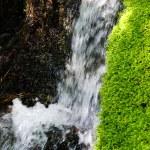 Green moss in alpine stream — Stock Photo #80091198