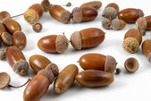 Acorns — Stock Photo