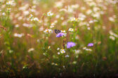 Farfalla sul fiore — Foto Stock