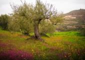 Sicilian countryside — Stock Photo