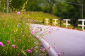 Countryside flowers — Stock Photo