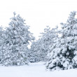 Snow-covered spruce. — Stock Photo #56618633