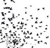 Flock of migratory birds — Stock Photo