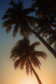Palm au coucher du soleil — Photo