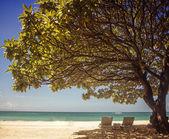 Sunbath under tree — Stock Photo
