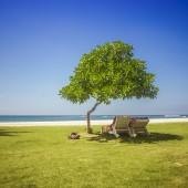 Sunbath under tree — Fotografia Stock