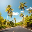 Nice asfalt road with palm trees — Stock Photo #62202781