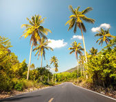 Nice asfalt road with palm trees — Stock Photo