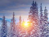 Amazing evening winter landscape. — Stock Photo