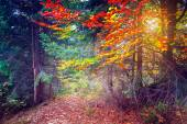 Majestic colorful forest — Stock Photo