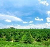 Palm oil plantations — Stock Photo
